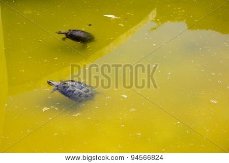 Two Turtles On Water
