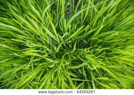 Closeup Photo Of Fresh Green Grass
