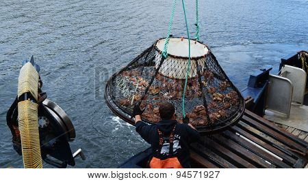 Raising A Crab Pot With The Catch Of The Day