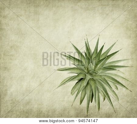 textured old paper background with agave plant
