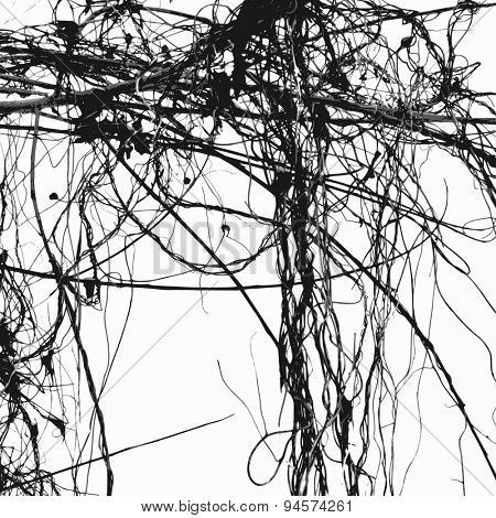 Wild ivy stems and bare branches silhouette, vector