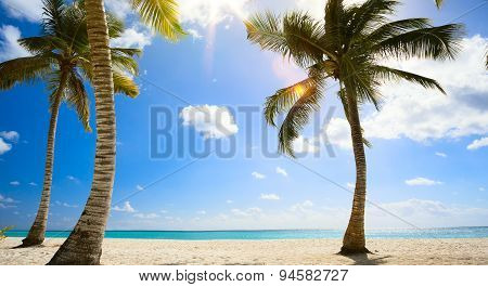 Art Untouched Tropical Beach In Caribbean Sea