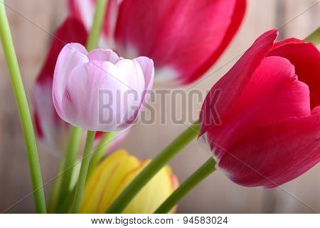 Close Up To Red Tulips, Close Up Flowers