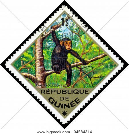 Vintage  Postage Stamp. Common Chimpanzee. Africa.