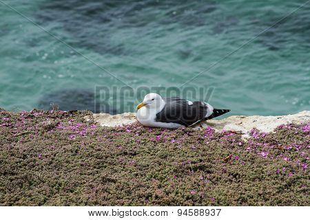 Seagull At The Coast