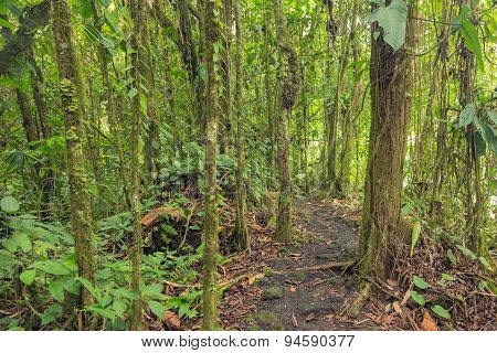 Path in lush rainforest