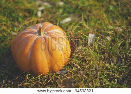 Ripe Orange Pumpkin Lying On The Grass