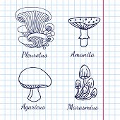 picture of kindness  - Vector illustration of different kinds of mushrooms on background of graph paper - JPG