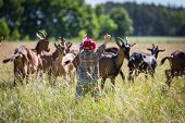 stock photo of pasture  - Little boy chasing goats on pasture. Beautiful childhood on village. ** Note: Shallow depth of field - JPG