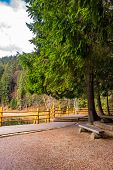 image of pier a lake  - pier on the Lake in mountain near coniferous forest - JPG