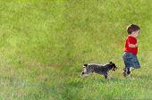 foto of blue heeler  - blue heeler puppy chasing a small boy through the grass - JPG