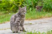 stock photo of tabby cat  - Outdoor portrait of guarded tabby cat with yellow eyes - JPG
