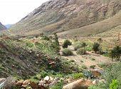 pic of canary-islands  - The green valley of Vega de Rio Palmas on the Canary Island Fuerteventura - JPG