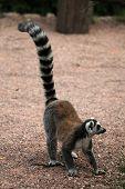 foto of rainforest animal  - Ring - JPG