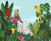 picture of bird paradise  - Tropical Paradise vector illustration - JPG