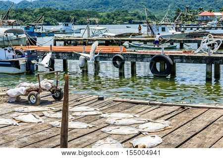 Livingston, Guatemala - August 31 2016: Egrets fly over fish drying in sun on dock while fishermen work on boats in Caribbean town of Livingston on Rio Dulce