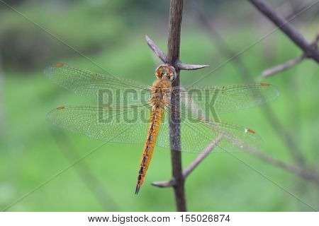 Dragonfly In The Nature Habitat