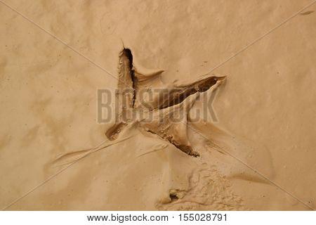 Bird Footprint On The Wet Muddy Soil