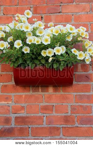 Vertical image of brick wall with metal box attached, filled with pretty white flowers that serve as a warm welcome to visitors.