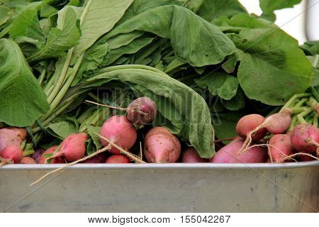Bunches of large beets set in metal pan, set on table at local farmers market