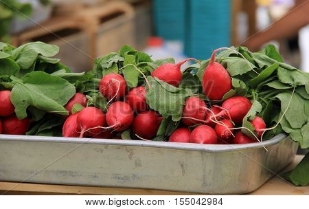 Metal pan filled with bunches of just picked radishes