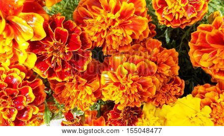 Flowers, bright, orange, congratulations, beautiful flowers, name of flowers