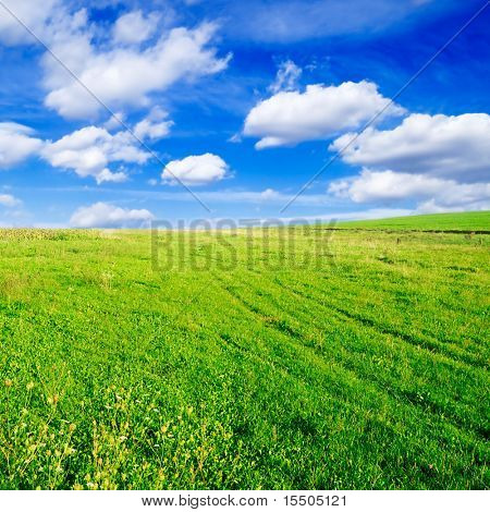 spring meadow covered by a grass