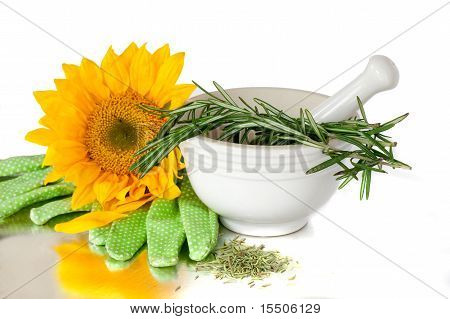 Herbs In A White Mortar And Pestle Ceramic Pot With Gardening Gloves And Sunflower