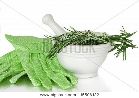 Herbs In A White Mortar And Pestle Ceramic Pot With Gardening Gloves