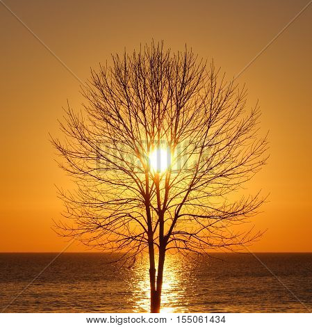 Silhouette of bare tree at sunrise on sea