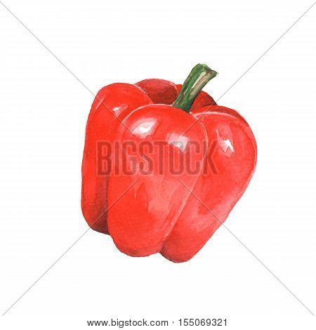 Pepper watercolor 1. Hand drawn illustration, isolated on white
