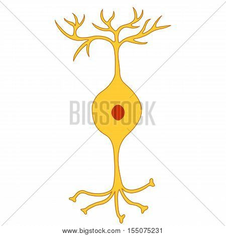 Bipolar neuron, Nerve Cell Neuron, isolated on white background