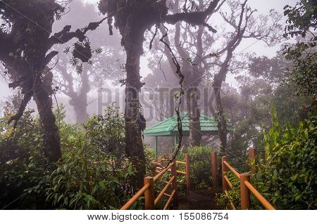 A wooden boardwalk leads through the Mossy Forest in Cameron Highlands in Malaysia. The forest is covered by mist.