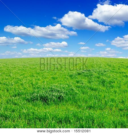 green spring field and beautiful white clouds