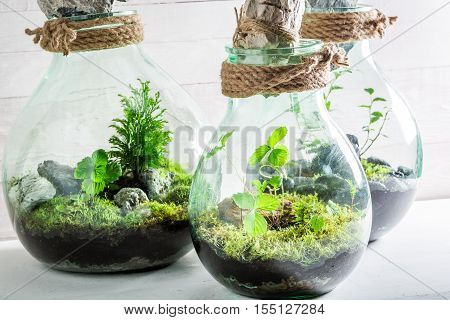 Stunning Live Plants In A Jar With Self Ecosystem