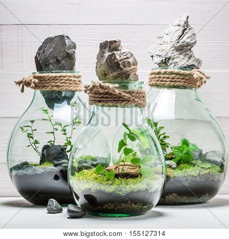 Stunning Jar With Live Forest, Save The Earth Idea