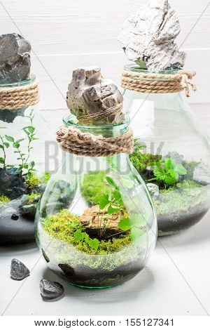 Small Jar With Piece Of Forest, Save The Earth Idea