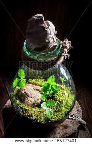 Small Live Plants In A Jar, Save The Earth Idea