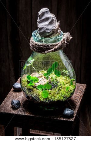 Stunning Jar With Live Forest With Self Ecosystem