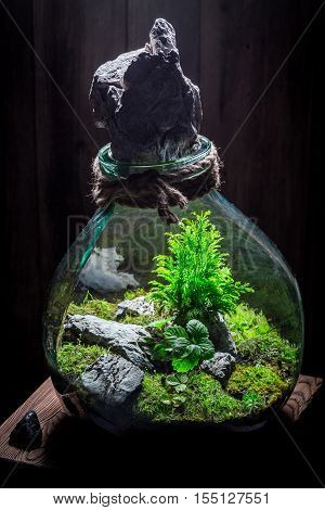 Small Live Plants In A Jar As New Life Concept