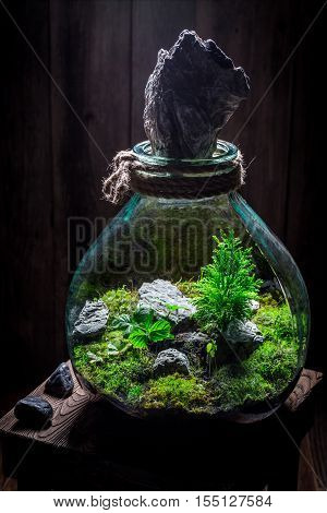 Wonderful Live Plants In A Jar, Save The Earth Idea
