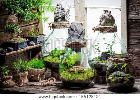 Amazing Jar With Live Forest As New Life Concept