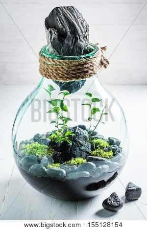 Amazing Live Plants In A Jar, Save The Earth Idea