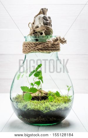Small Live Plants In A Jar With Self Ecosystem