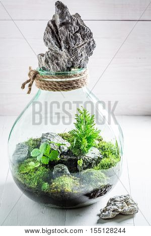 Small Jar With Live Forest, Save The Earth Idea