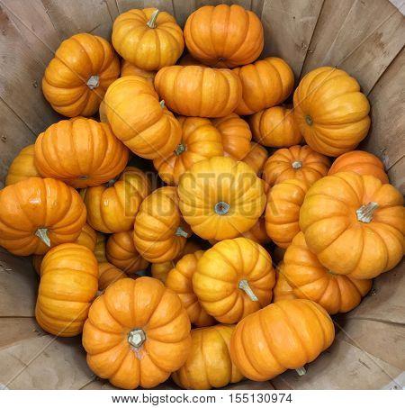 Very Nice Basket of yellow Pumpkins