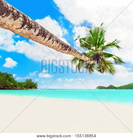 Perfect tropical white sandy coconut palm beach Baie Lazare Mahe island Seychelles gem of the Indian Ocean
