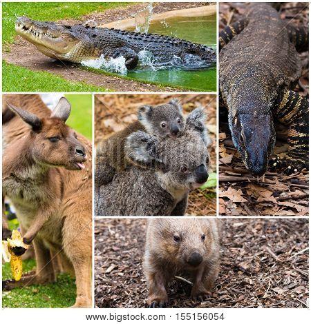 Photo collage of Australian native wildlife with crocodile, dragon lizard, kangaroo, koalas and wombat