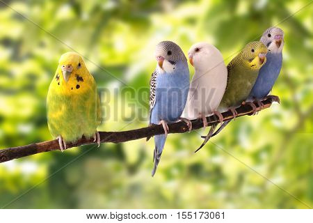 the budgies are in the roost on the green background