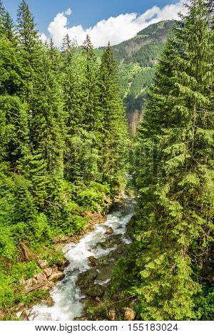 Mountain stream in a forest in summer